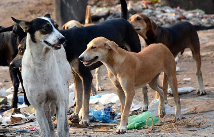 dogs in jaipur